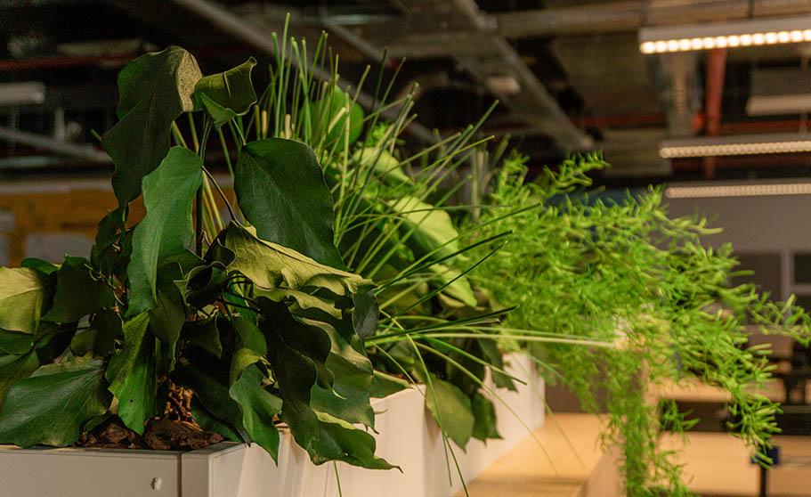 ¿Qué son las plantas preservadas?
