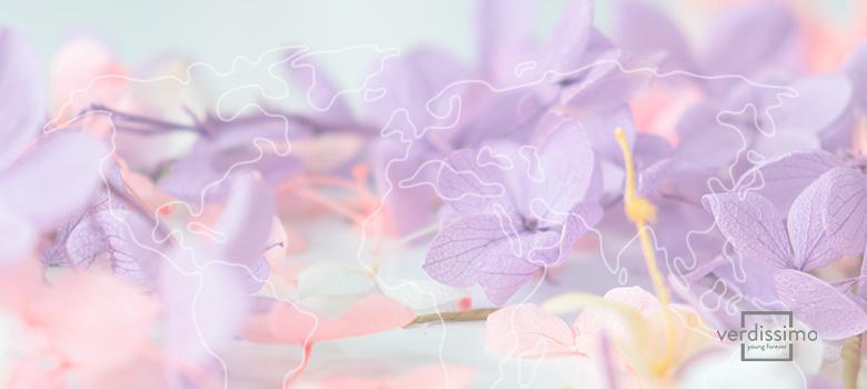 Flores nacionales por países - Verdissimo