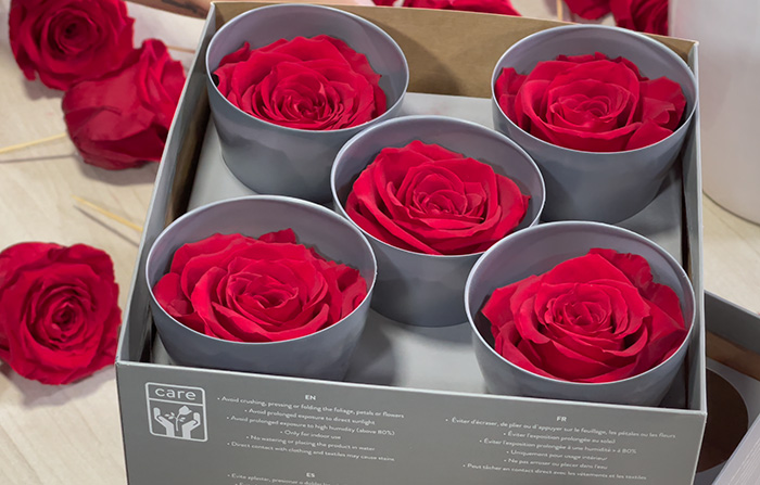 Nuevo tamaño de rosa Queen - Verdissimo