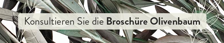 Broschure - Olivenbaum - Verdissimo