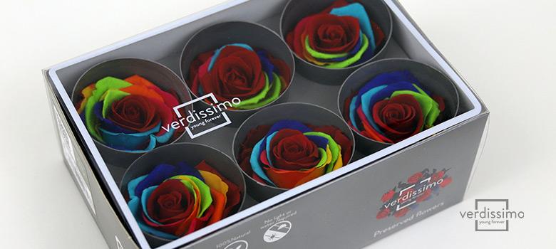 Rosa Arcoiris de Verdissimo