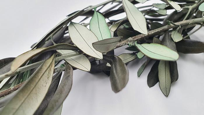 Feuilles olivier stabilise - Verdissimo