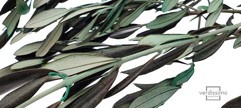 Olivo preservado - Verdissimo