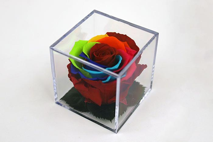 Rosa Arcoiris - Cubo cristal - Verdissimo